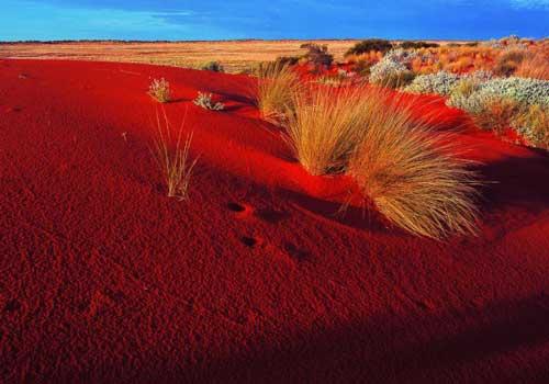 ярко красный песок,пустыня, голубое небо, растения, трава