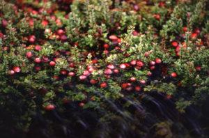 Растительный мир тайги. Какие растения встречаются в таежной зоне? 2