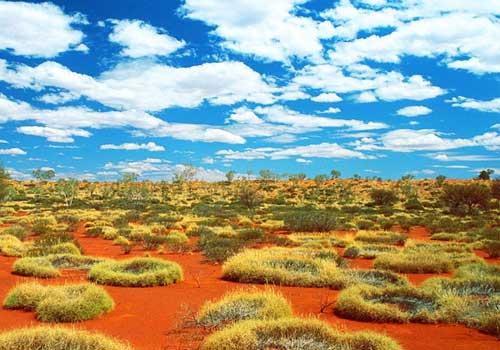 большая песчаная пустыня, Австралия, растения, трава, белые облака, голубое небо