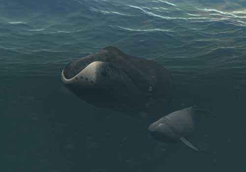 гренландские киты, полярные киты, самка и детеныш