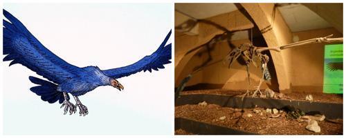 Аргентавис - вымерший вид гигантских летающих птиц