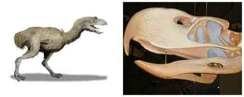 Фороракосы-род огромных вымерших птиц