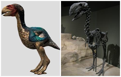 Гасторнисы - древние нелетающие птицы