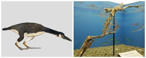Гесперо́рнисы - вымерший род птиц