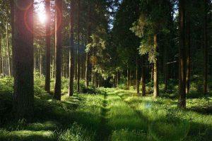 утренний лес, восход солнца, дорожка, мятая трава