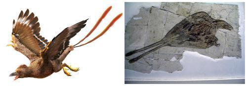 Конфуциусорнисы-род доисторических птиц