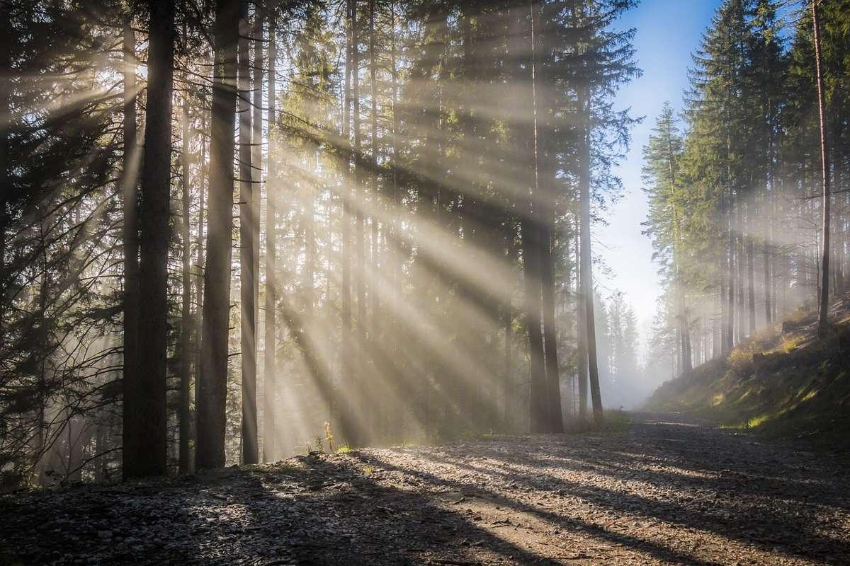 лучи солнца, рассвет, яркий свет, в лесу