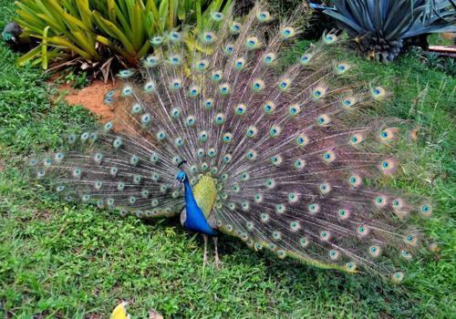Птицы - единственные пернатые животные в мире