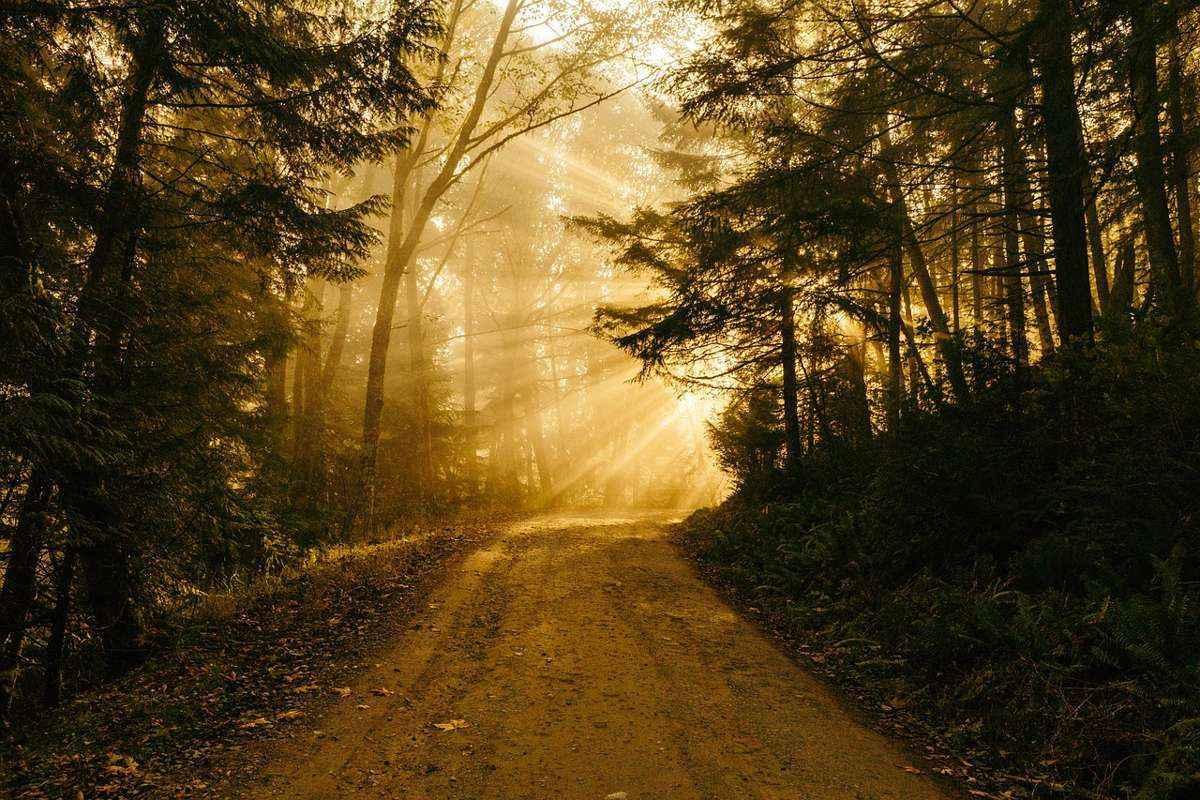 лесная дорожка, лучи солнца, рассвет