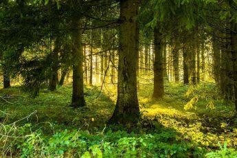восход солнца, лес густая растительность
