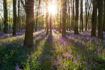 весна, цветы, лес, рассвет, восход солнца