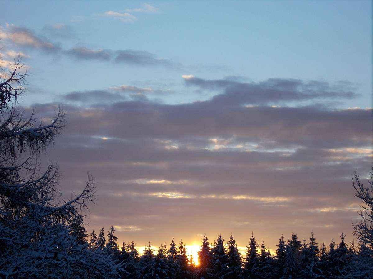восход, солнце, зима, верхушка леса, деревья
