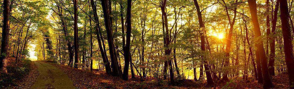 лесная тропинка, рассвет, солнце, деревья