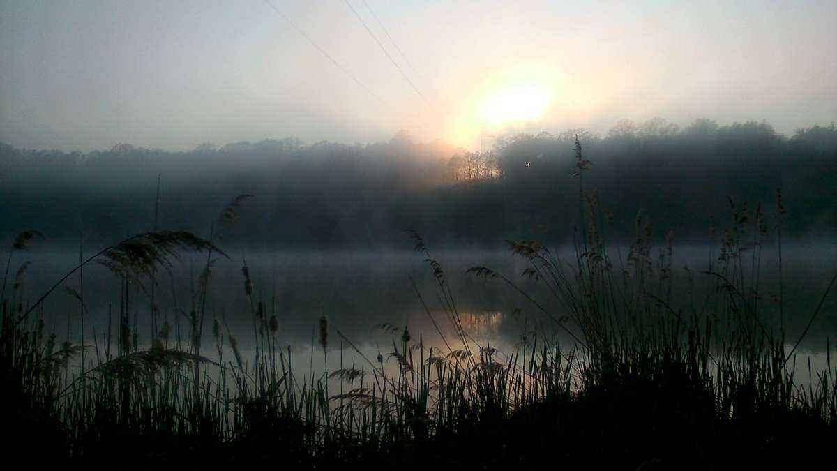 лес, озеро, восход солнца, над лесом, туман
