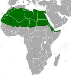Газель-доркас, ареал обитания, карта Африки
