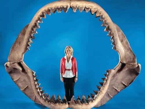 челюсть и зубы мегаладона
