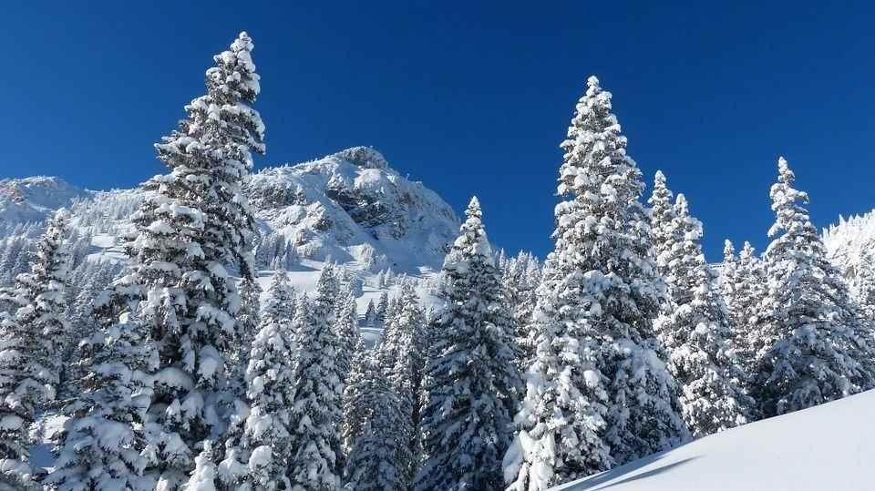 деревья и горы вснегу