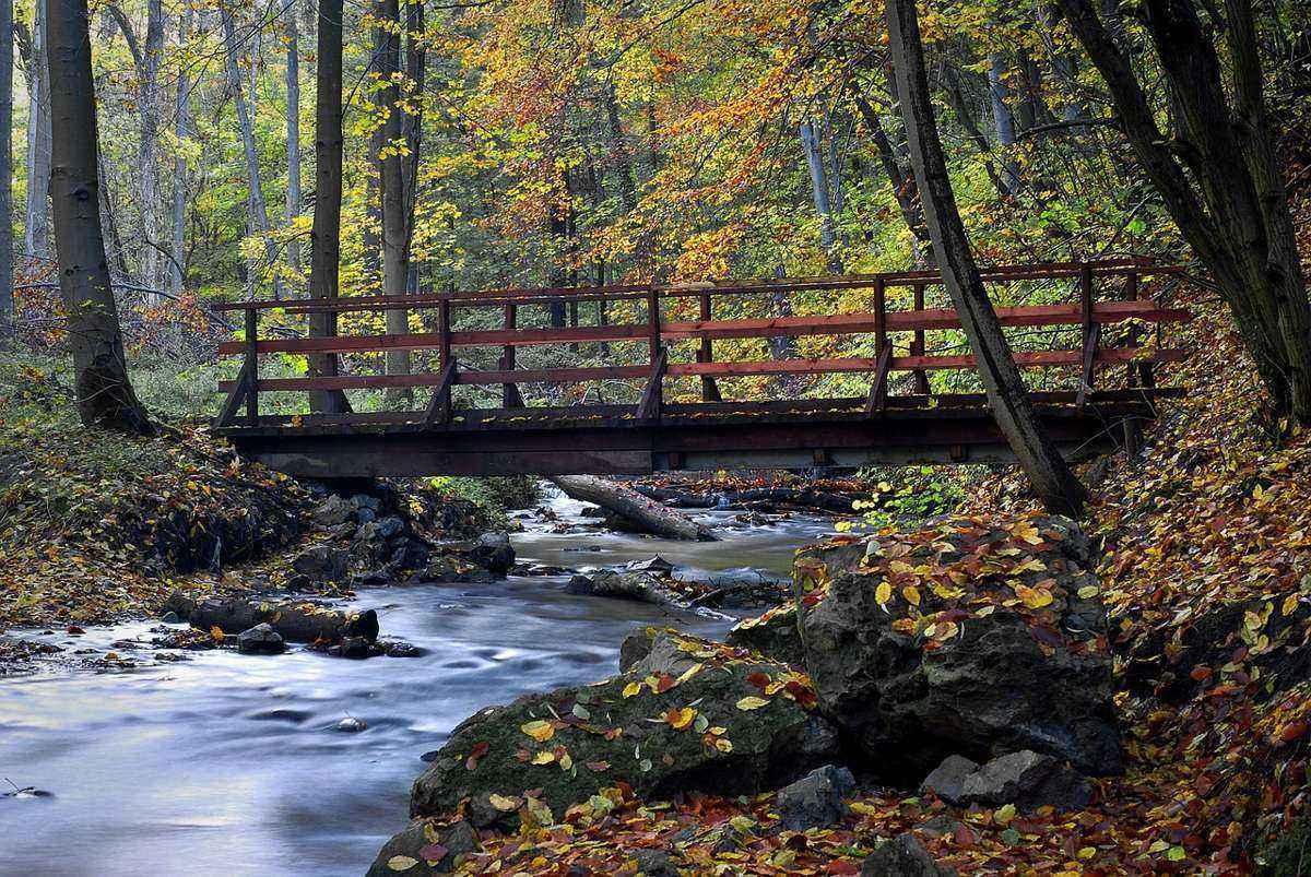 лесной ручей, деревянный мост, осень