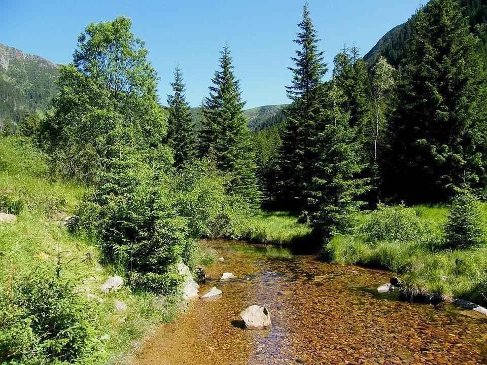горный ручей среди зелени деревьев и травы
