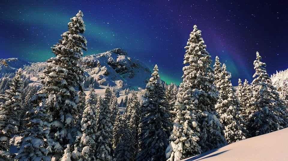 хвойные деревья, гора, снег, ночь, звездное небо