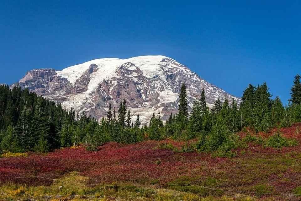 хвойный лес на фоне заснеженой горы