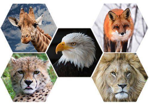 клеточный-коллаж-с-животными