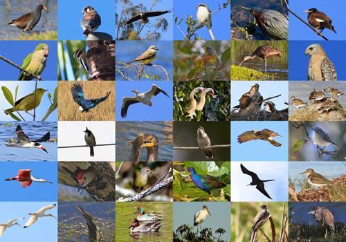 колаж фото - видовое разнообразие птиц