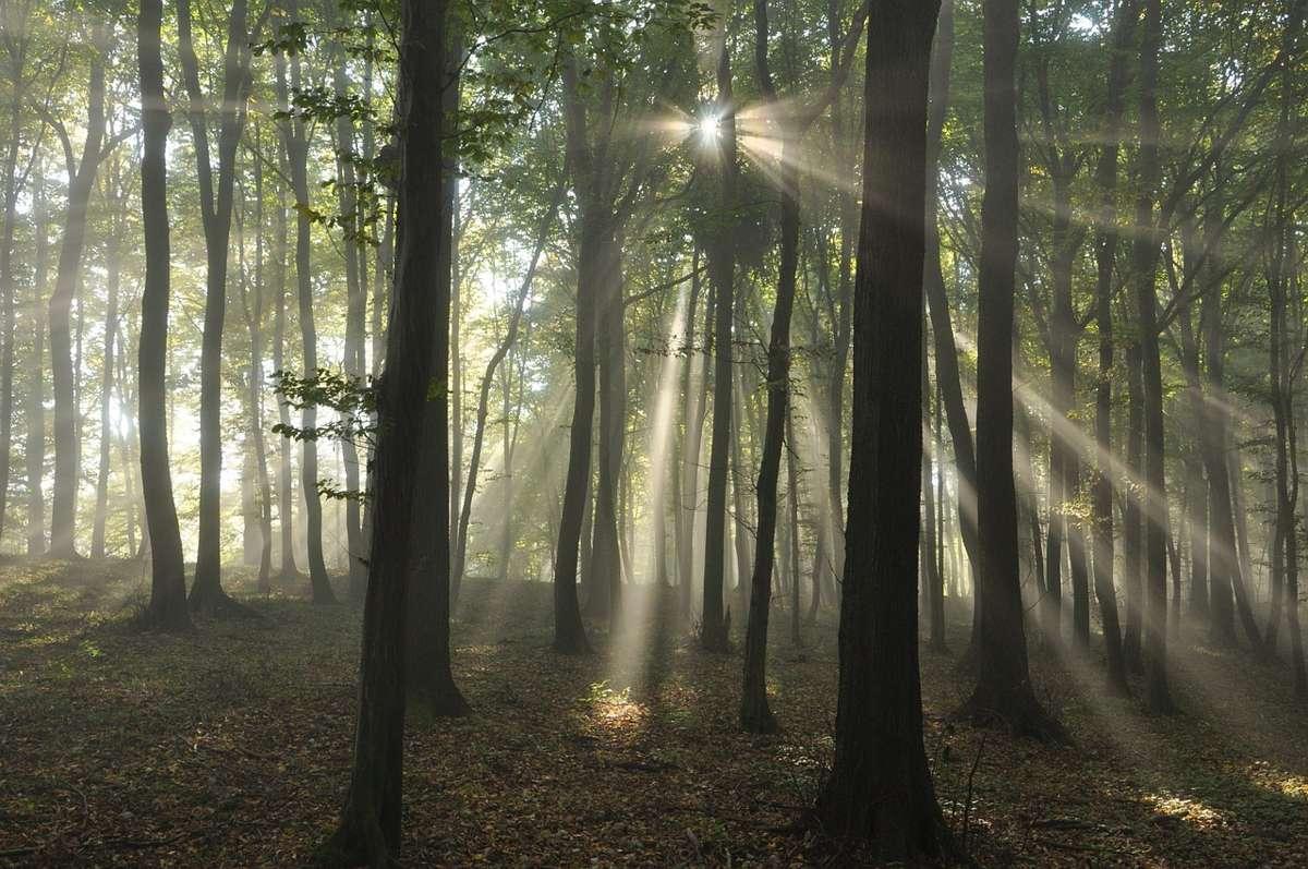 рассвет, туман, лучи, солнце, деревья, лес