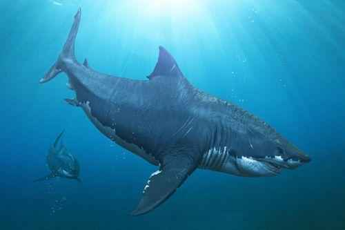 мегалодон - древняя гигантская акула