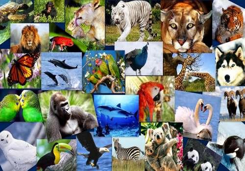 многообразие видов животных