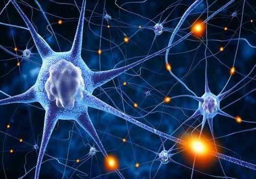 нервные клетки животных