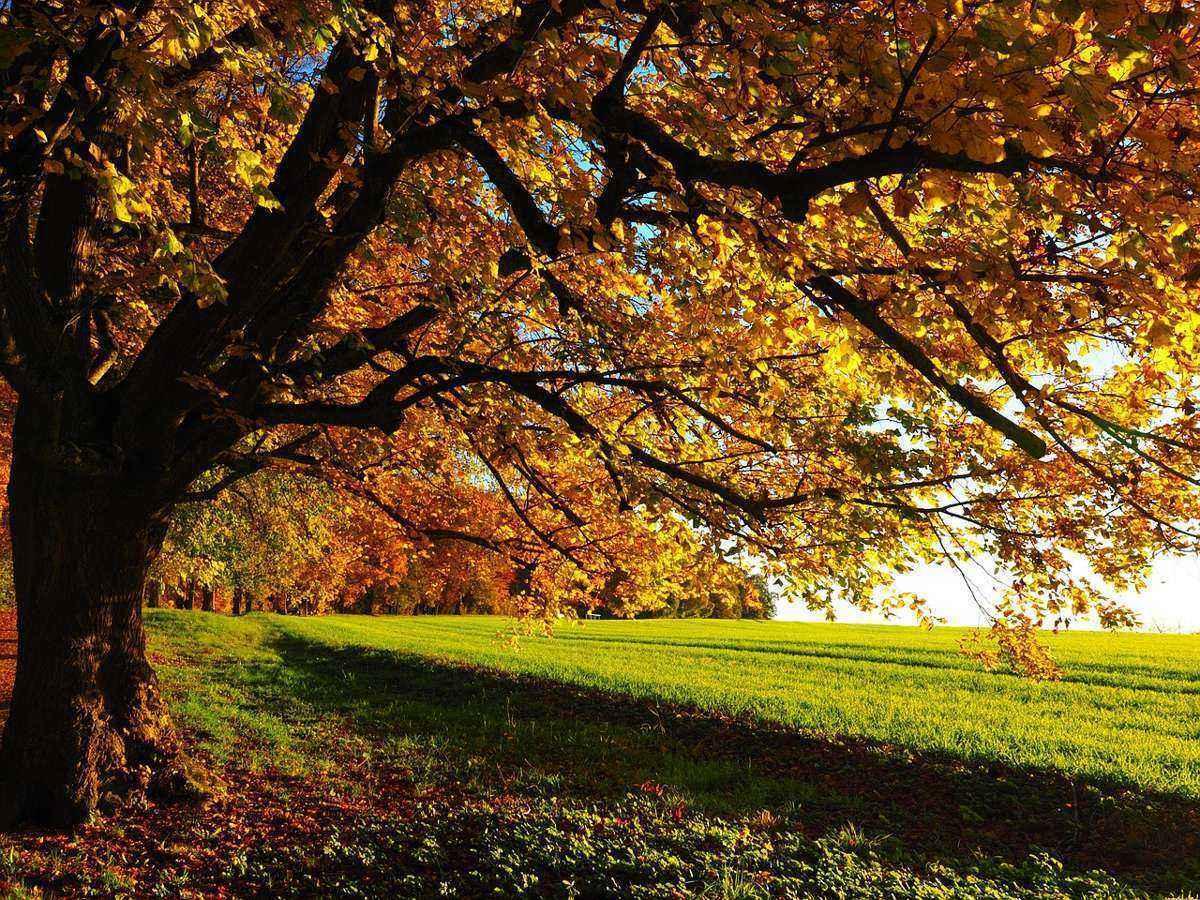 осенние деревья, зеленая опушка