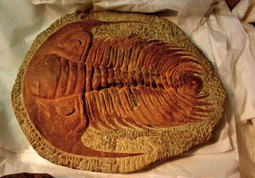 первые ископаемые животные