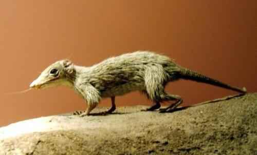 первые млекопитающие со времен динозавров