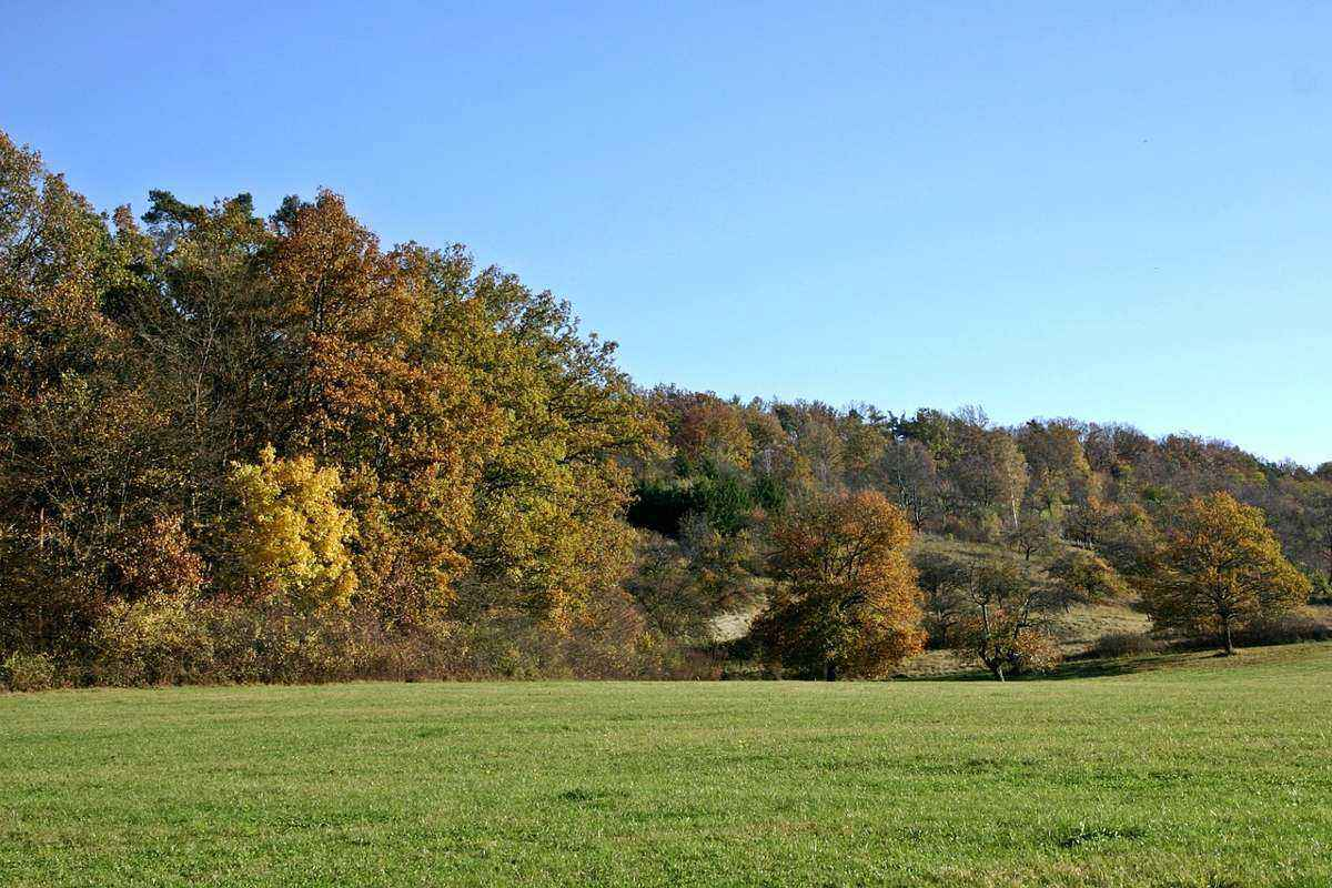 осень, лес, опушка, пейзаж, голубое небо, зеленая поляна