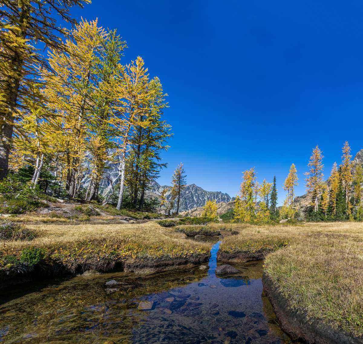 лес, горы, голубое небо, чистый ручей, прозрачный ручеек,