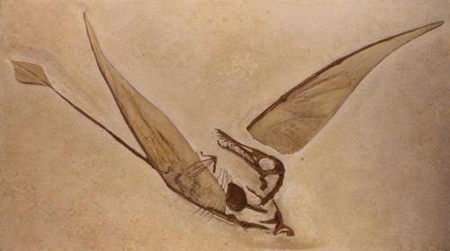 птерозавр - ископаемые останки