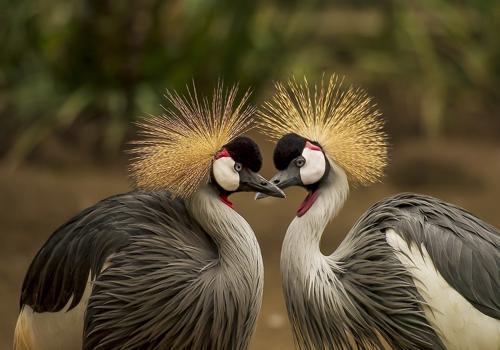 птицы - моногамны