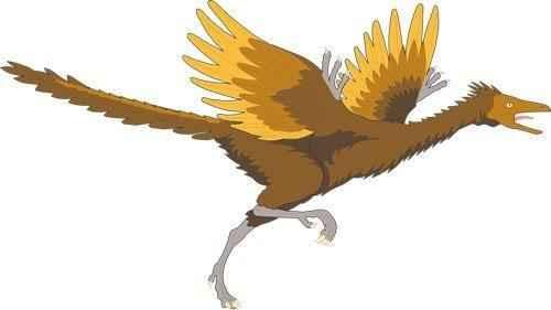 птицы-потомки динозавров