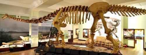 реконструкция скелета большого динозавра