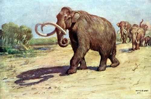 рисунок мамонтов