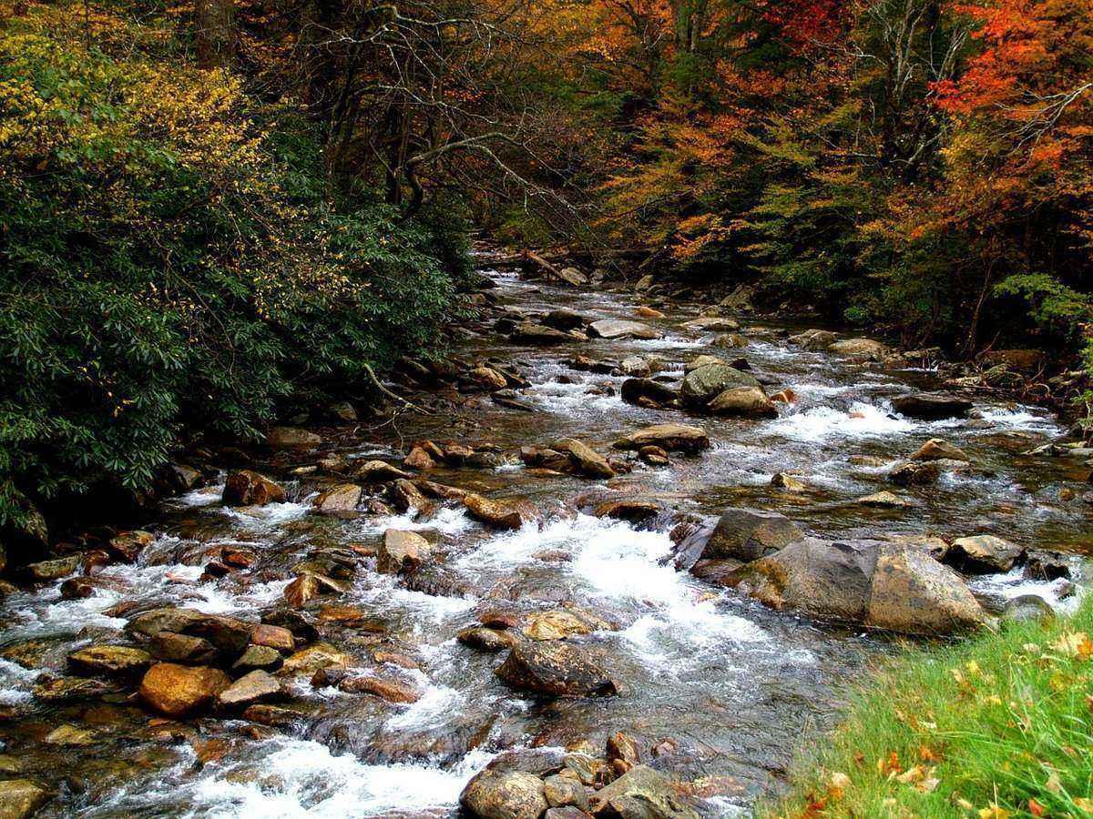 осень, лес, ручей, камни, деревья,