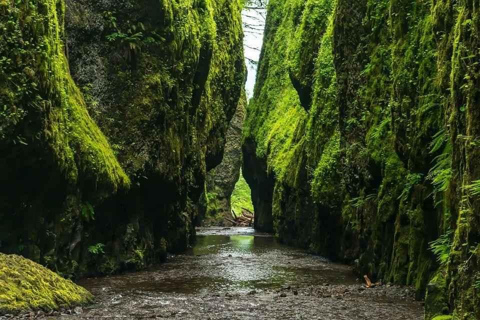 ручей между зеленых скал