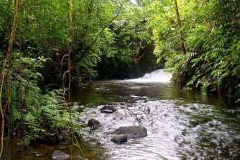 лес, зеленые листья, деревья, ручей,