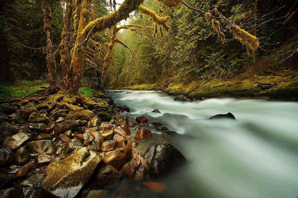 сказочный лес, ручей, размытая вода, деревья во мху,
