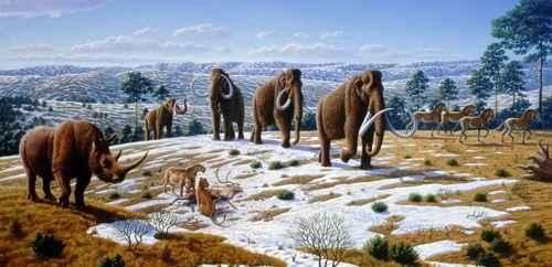 шерстистый носорог и мамонты