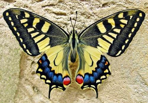 симметрия у бабочки