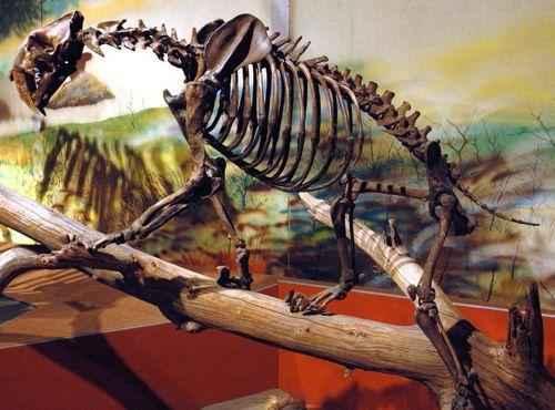 скелет саблезубого тигра на ветке