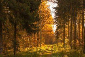 заход солнца, лесная тропа, лес, деревья