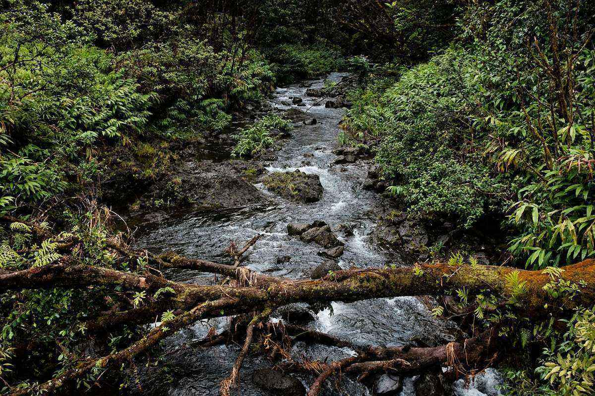 в лесу, ручей, упавшее дерево, поток воды